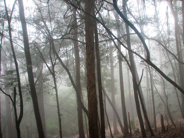 Mist covered trees - Kodaikanal