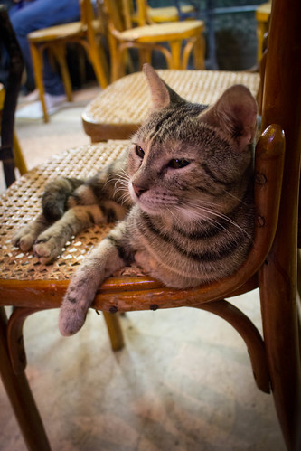 The return of Fishawy kitty