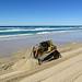 Australian Coastal Erosion - Protective Measures