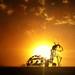 Burning Man 2012 by arno gourdol