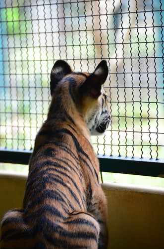 7936202220 a8db607347 Are Thailands Tiger Farms Ethical?