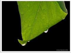 nach dem großen Regen - after the heavy rain (1)