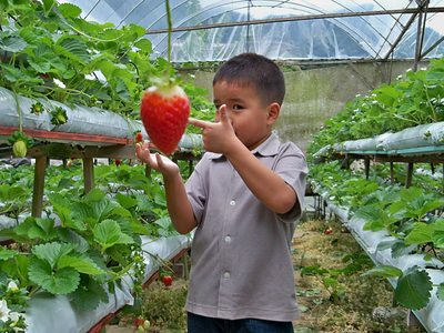 20120829_JulianGiantStrawberry