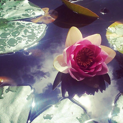 Lily pond in the lakes
