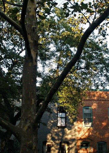 houses tree