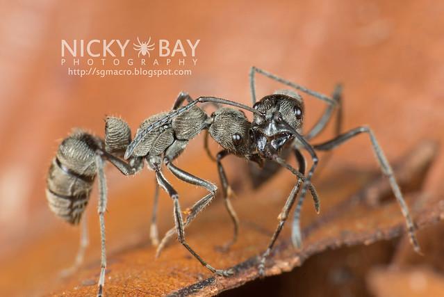 Ants - DSC_3617