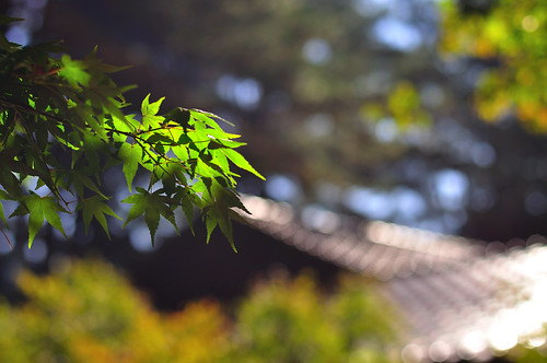 Green Maples 青楓@福壽山農場