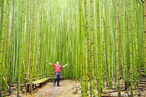 A thick, bamboo forest in Smangus, Taiwan.