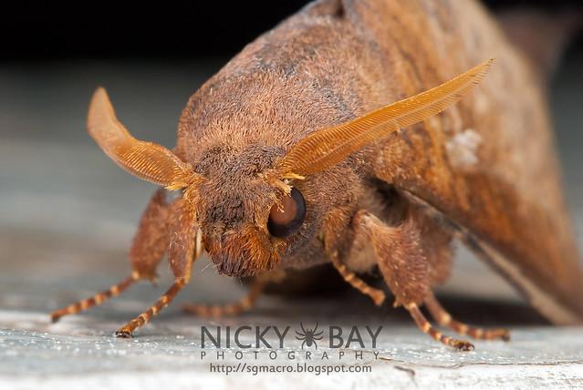 Moth - DSC_3910