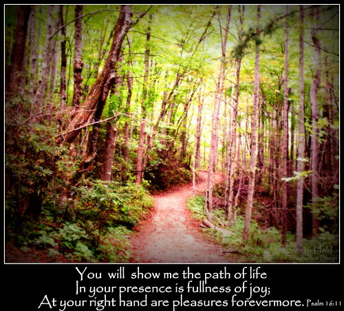 life green canon catchycolors photography christ god path jesus joy christian bible christianity inspirational promise encourage mountainpath verse encouragement bibleverse northcarolinamountains precept southernphotography psalm1611 canont2i canonrebelt2i lightattheendofapath youwillshowmethepathoflife highpasturesretreatcenter momentstohold