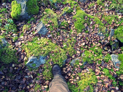 autumn nature leaves forest foot shoe moss stones steps