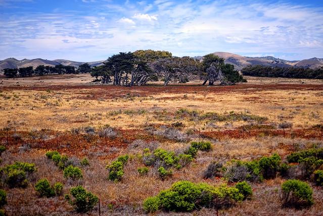 Central California's Serengeti