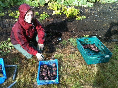 Mel inspects the potatoes