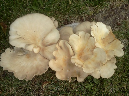 weird fungus / mushroom