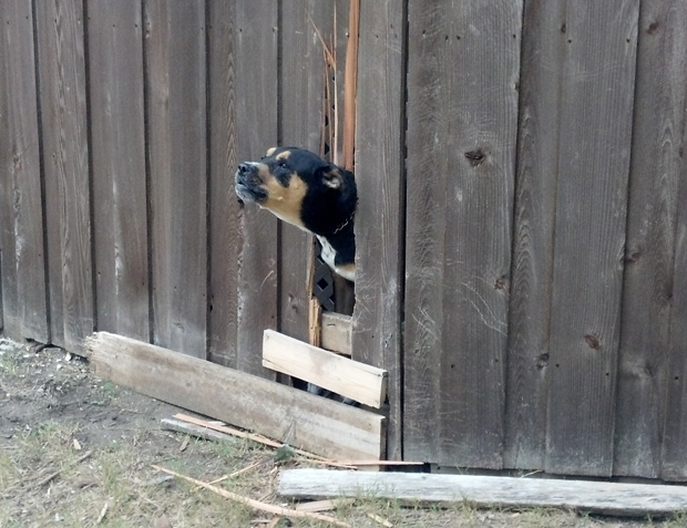 dog fence crop