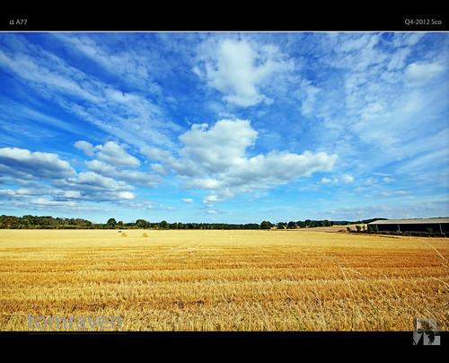 summer sky field clouds golden scotland sony sigma hay alpha alves moray a77 morayshire tomraven aravenimage flickrstruereflection2 flickrstruereflectionlevel1 q42012