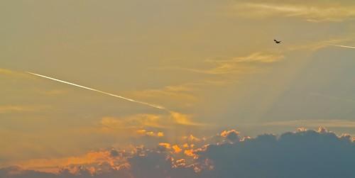 blue sunset sky sun bird nature yellow clouds plane grey