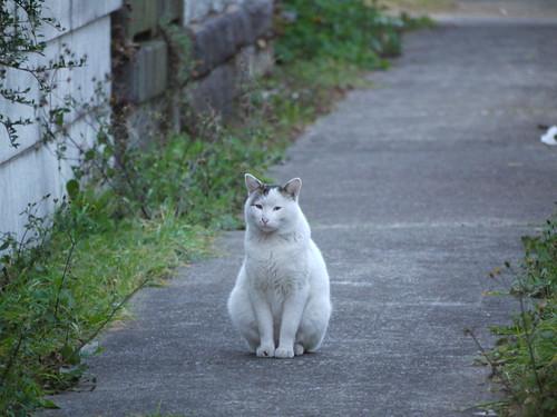 猫@豊島区