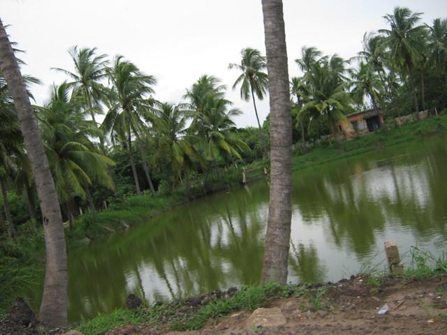 Coconut trees, Canon POWERSHOT A480