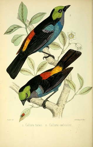 n27_w1150 by BioDivLibrary