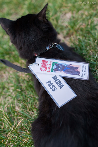 CNN cat
