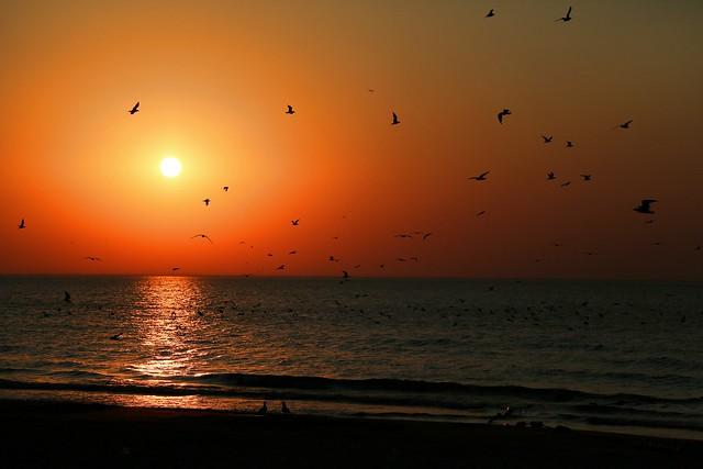 The Morning Gulls at Bradford Beach