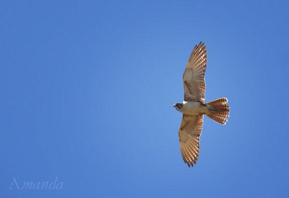 bird_0298