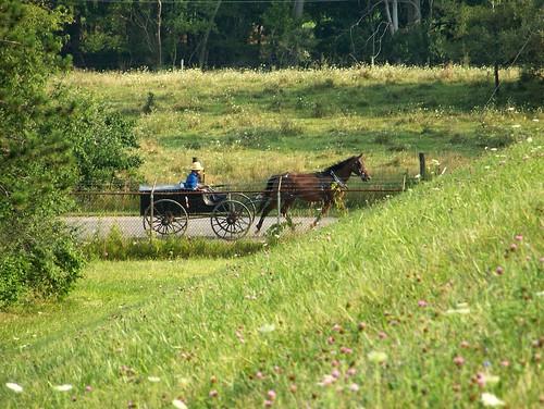 100_5170_Amish