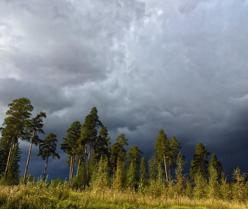 trees storm tree nature clouds finland nokia lumia nokialumia900