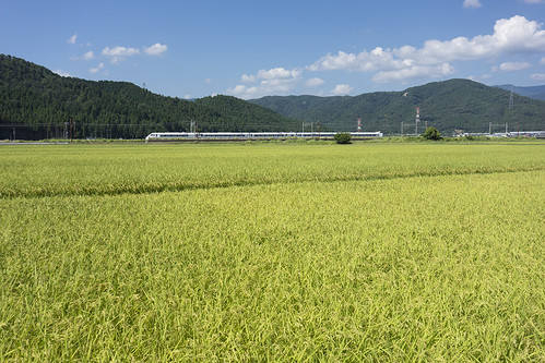 "the paddy field and Limited Express ""Shirasagi"""