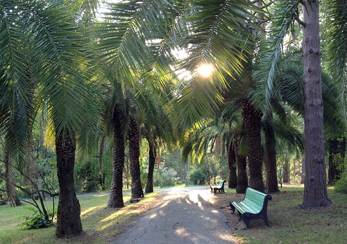Sochi Arboretum (Dendrariy)