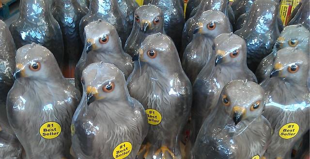 Bunnings birds