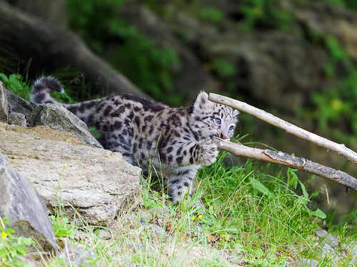 Mohan playing with the branch