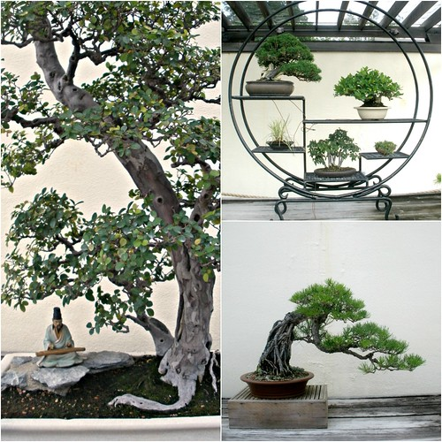 bonsai collage