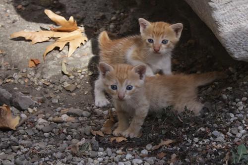 Katzen in Istanbul (3)