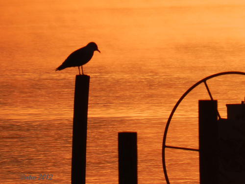 morning lake water sunrise gold golden nikon morningmist chautauqua chautauquany chautauqualake coolpixp500