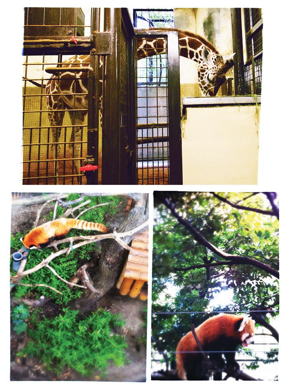 zoo 6