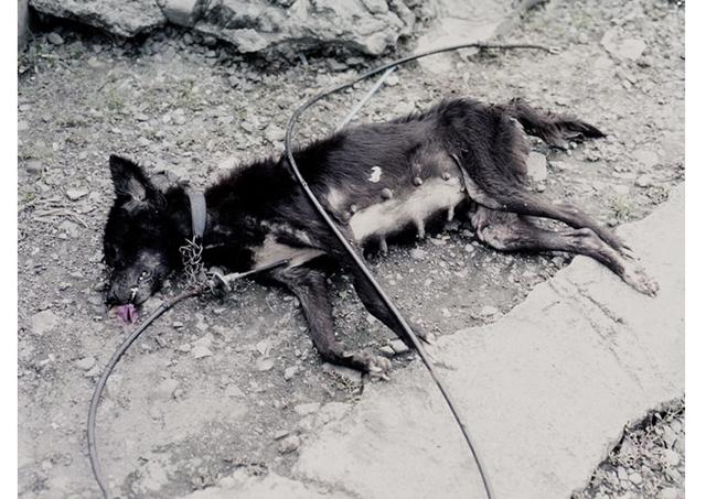 asphalt-and-rain-dead-dog