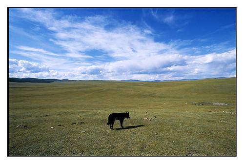 analog slide mongolia