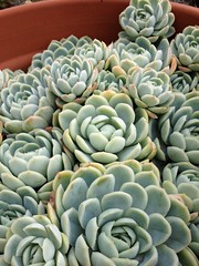 Happy pot of succulents