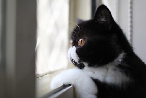 [フリー画像素材] 動物 1, 猫・ネコ ID:201210061000
