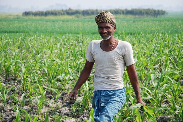 Farmer at work in maiz...