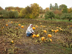 Lisa picking pumpkins (2007)