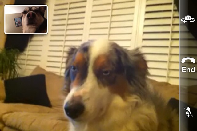 2 Dogs, 1 FaceTime... They Are Not Amused
