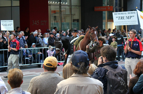 Memorial Horses 'Gallant' and 'Trump' on 2012 Anzac Day March