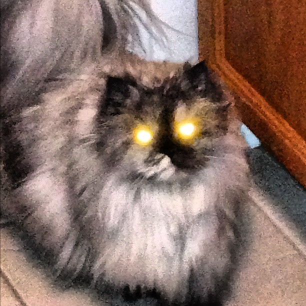 Possessed #cat #noizenews
