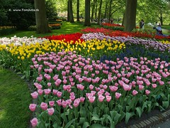 Dutch Tulips, Keukenhof Gardens, Holland - 0690