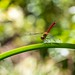 Dragonfly by Yorkey&Rin