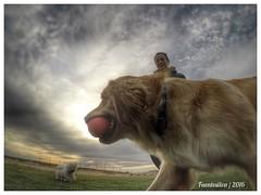 Paseo con los perritos