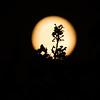 moon-August 18, 2016-4779